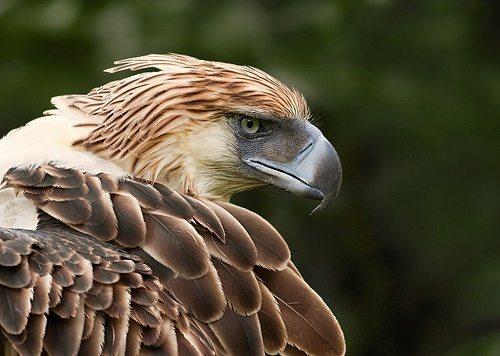 najväčší vtáky pics